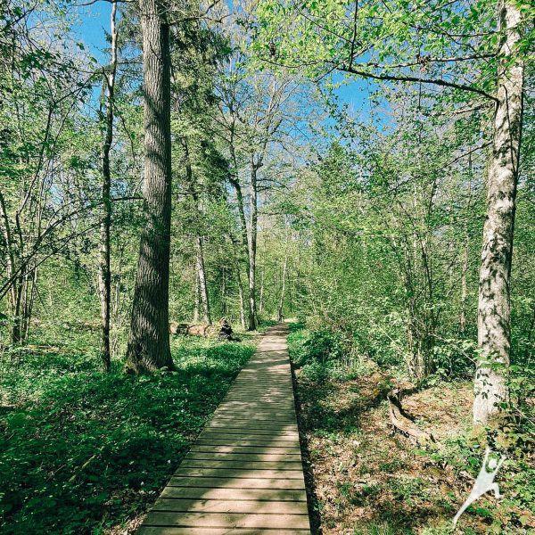 Ypatingai saugomo Buktos miško takais